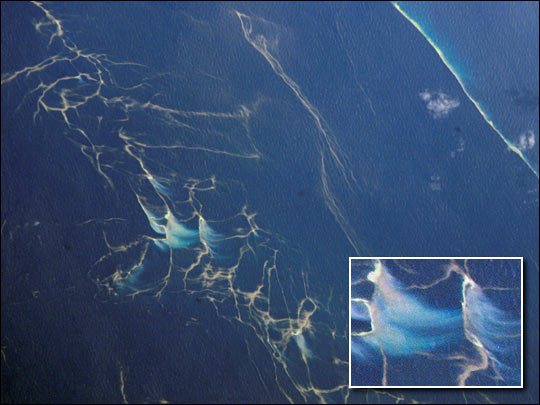 Plankton Blooms, Capricorn Channel