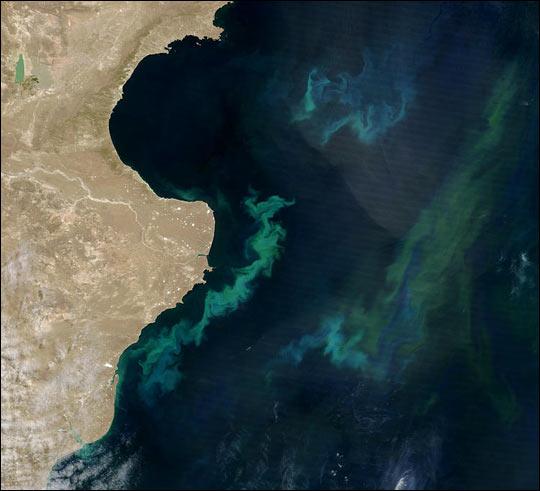 South Atlantic Phytoplankton Bloom