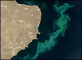 South Atlantic Phytoplankton Bloom