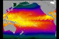 Global Sea Surface Temperature from AMSR-E