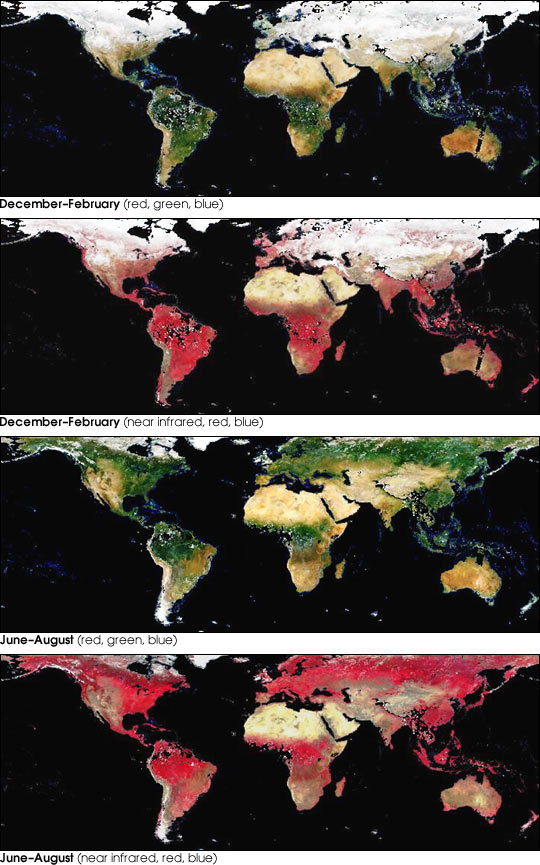Global, Seasonal Surface Albedos