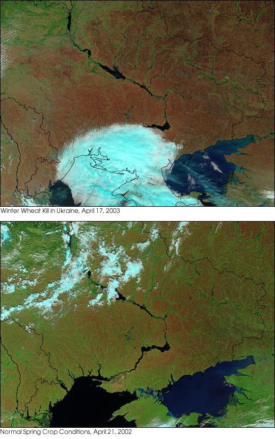 Icy Spring Decimates Winter Crops in Ukraine