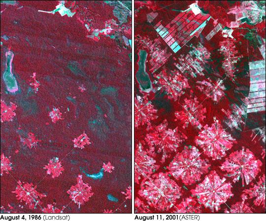 Deforestation in Santa Cruz, Bolivia