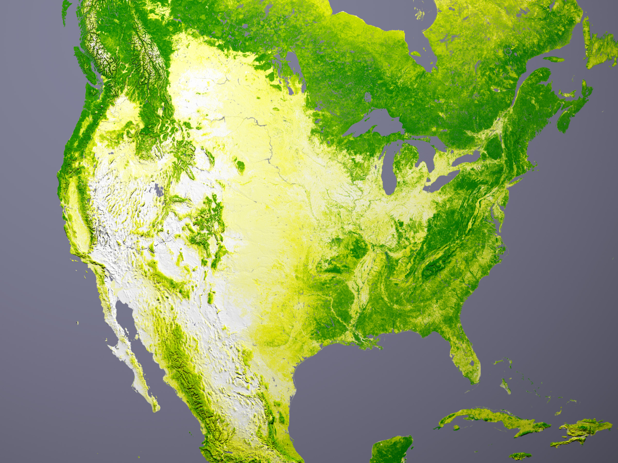 Tree Cover Image Of The Day - Us forest cover map