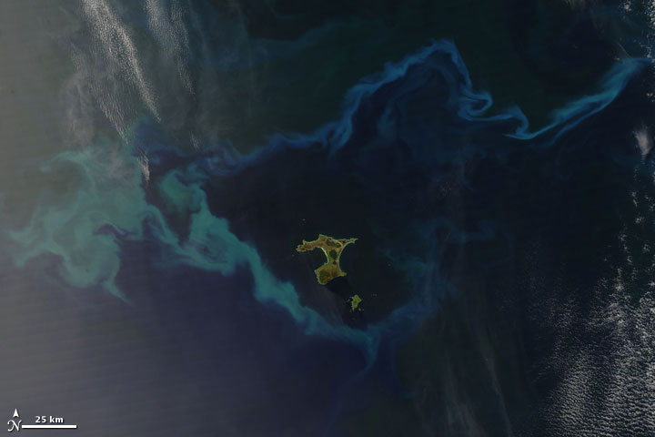 Plankton Bloom Surrounds Chatham Islands