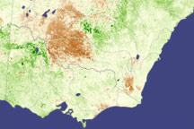 Locusts in Australia - selected image