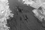 2007 San Francisco Bay Oil Spill