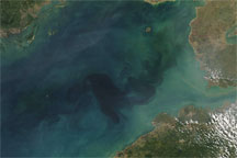Chlorophyll in the Gulf of Tonkin