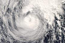 Typhoon Dolphin