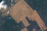 Progressive Forest Clearing, Bolivia