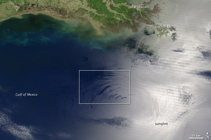 Oil Seeps in the Gulf of Mexico