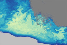 Ocean Life in the Ross Sea