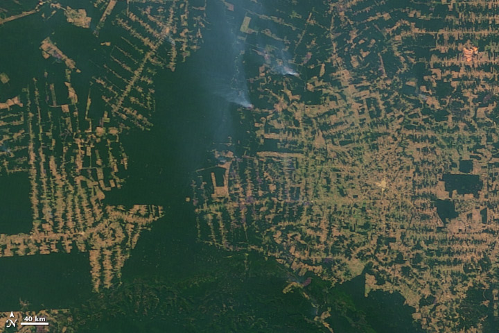 Fires and Deforestation on the Amazon Frontier, Rondonia, Brazil