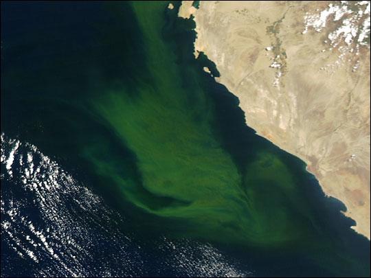 Bright Waters off Peru