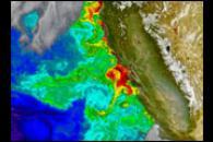 Phytoplankton off the Coast of California