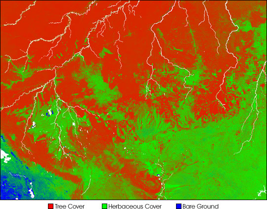 Deforestation Patterns in the Amazon