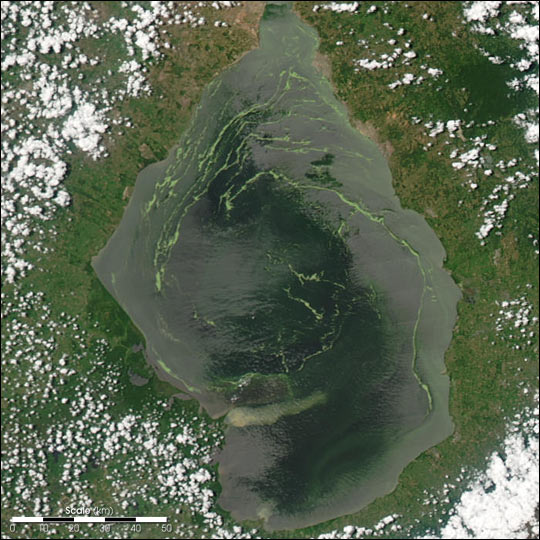 Duckweed Invasion in Lake Maracaibo