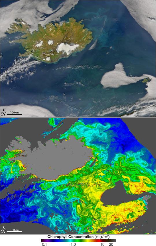 Phytoplankton around Iceland