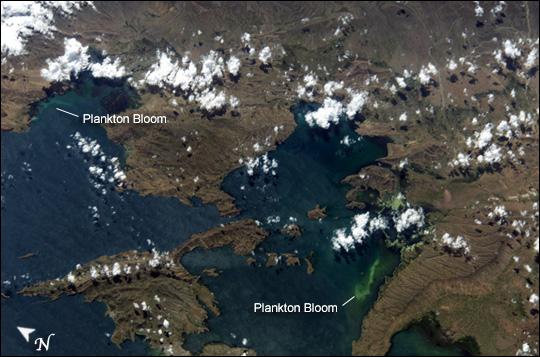 Plankton Bloom in Lake Titicaca