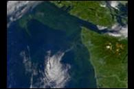Toxic Algae Bloom off Washington