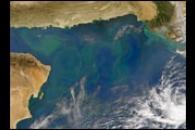 Phytoplankton Bloom in the Arabian Sea