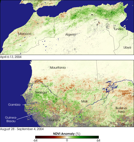 Locusts Plague Northern and Western Africa