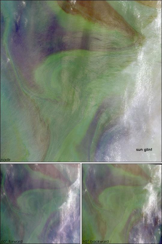 Red Plankton in the Arabian Sea