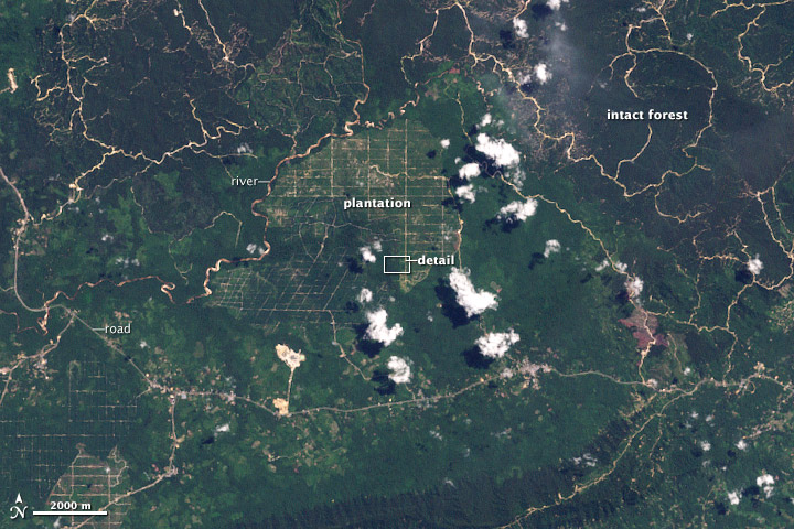 Deforestation in Malaysian Borneo