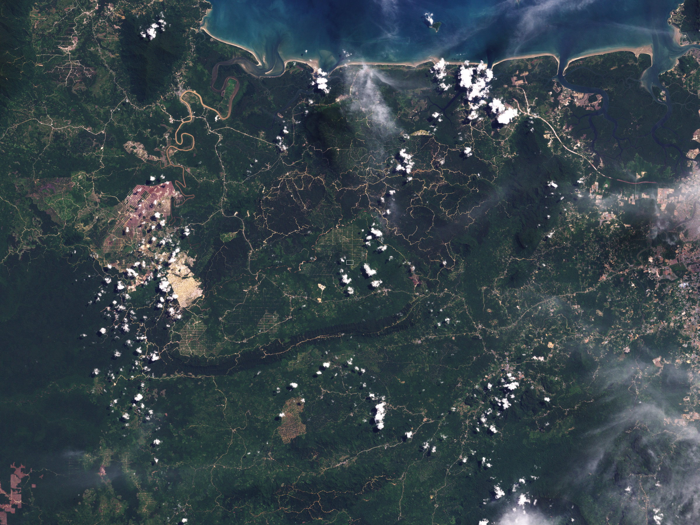 Deforestation in Malaysian Borneo - related image preview