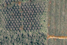 Deforestation in Malaysian Borneo - selected image