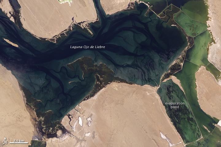 Laguna Ojo de Liebre, Mexico