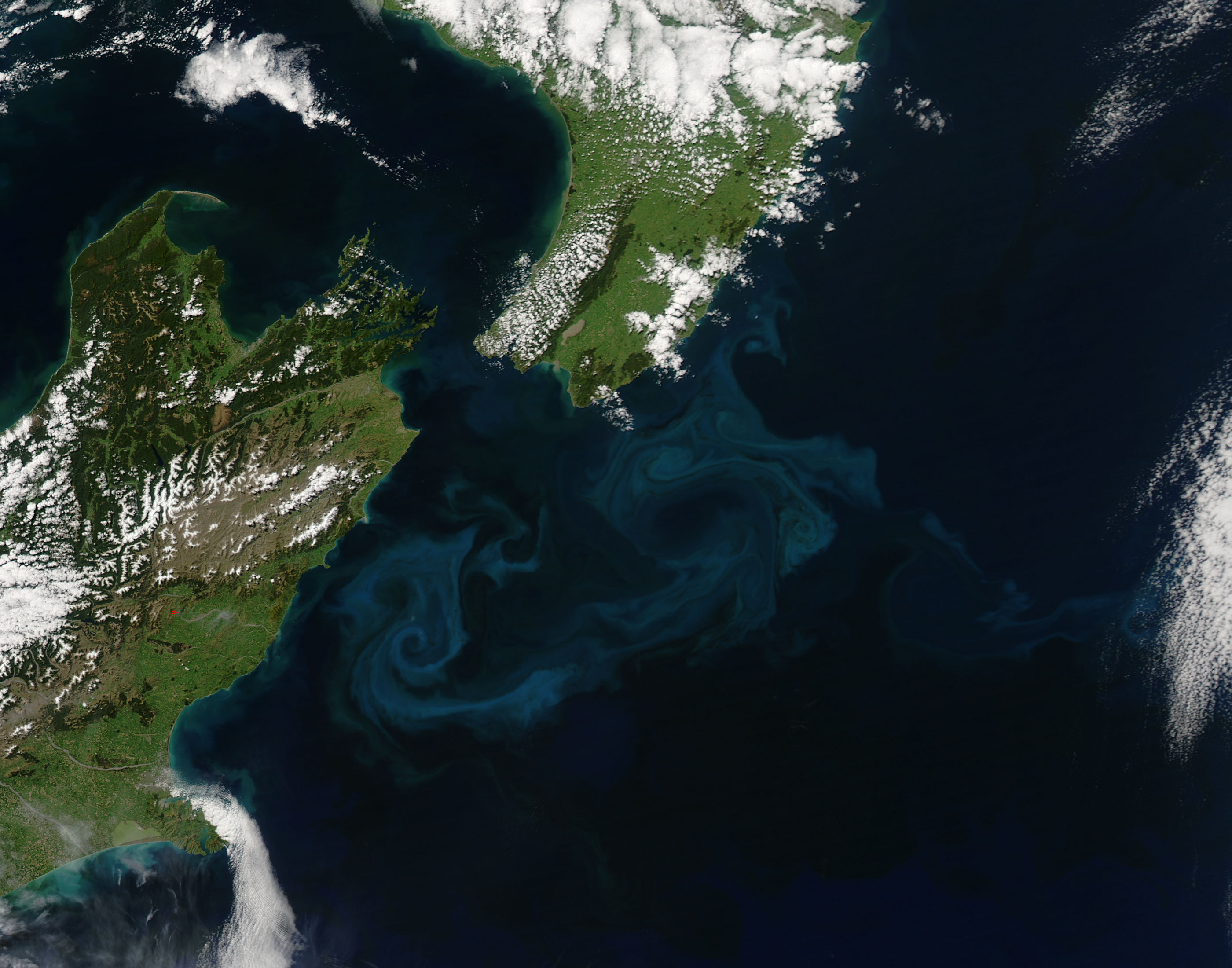 Spring Bloom in New Zealand Waters - related image preview