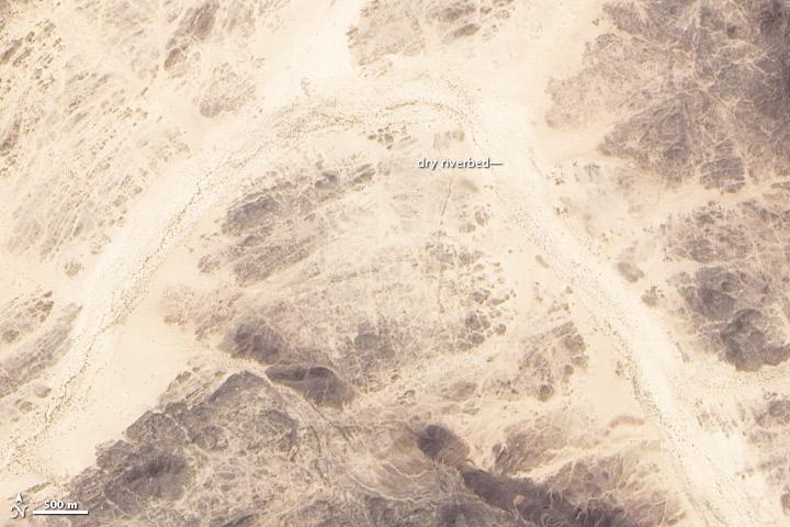 Dry Wadi Fills with Life