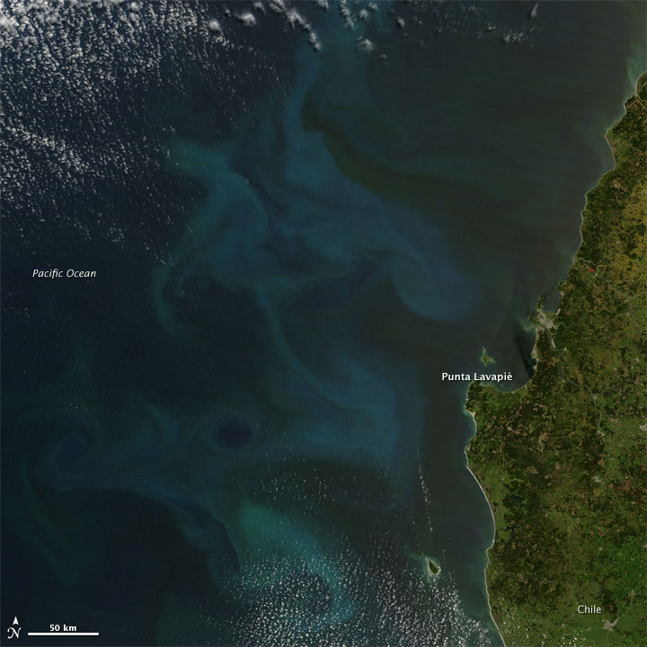 Phytoplankton Bloom off Chile