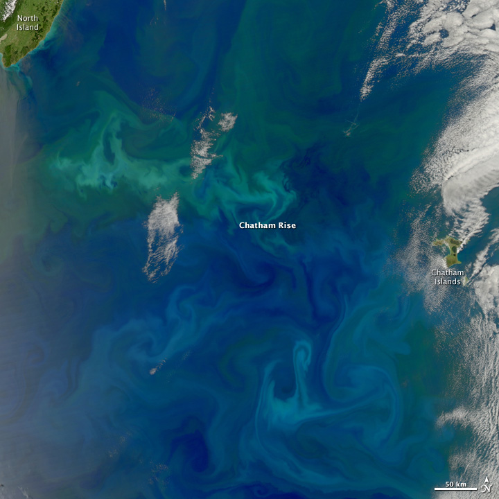 Phytoplankton Bloom Over Chatham Rise, South Pacific