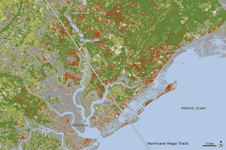 Damage to Migratory Bird Habitat Following Hurricane Hugo  Image