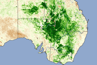 Lush Vegetation Brings Locusts to Eastern Australia - related image preview