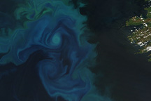 Phytoplankton Bloom in the North Atlantic