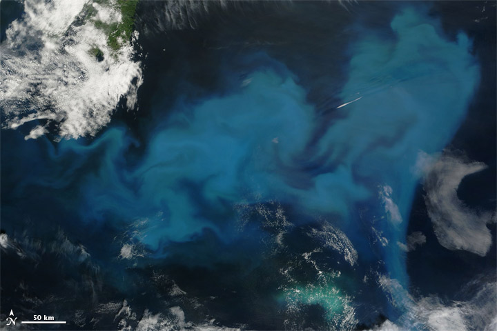 Phytoplankton Bloom off Newfoundland