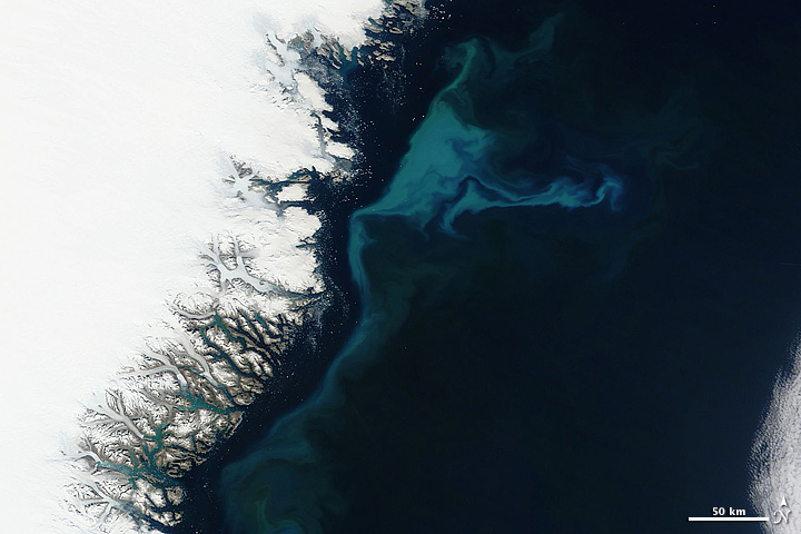 Phytoplankton Bloom off Greenland