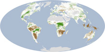Drought Slows Plant Growth, 2000-2009