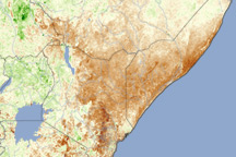 Drought in East Africa - selected image