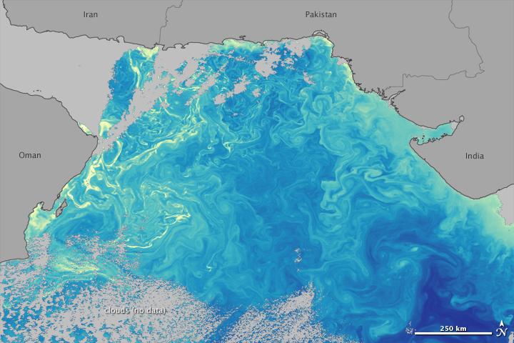Phytoplankton in the Arabian Sea