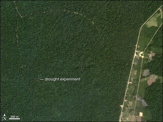 Amazonian Drought Experiment
