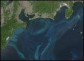 Phytoplankton Bloom Near Japan
