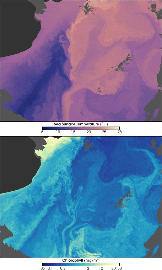 Malvinas Current, South America