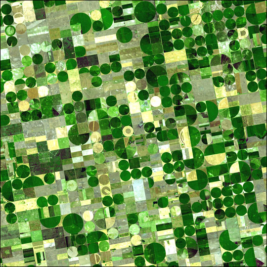 Crop Circles in Kansas