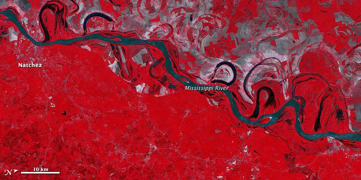 Floodwaters near Natchez