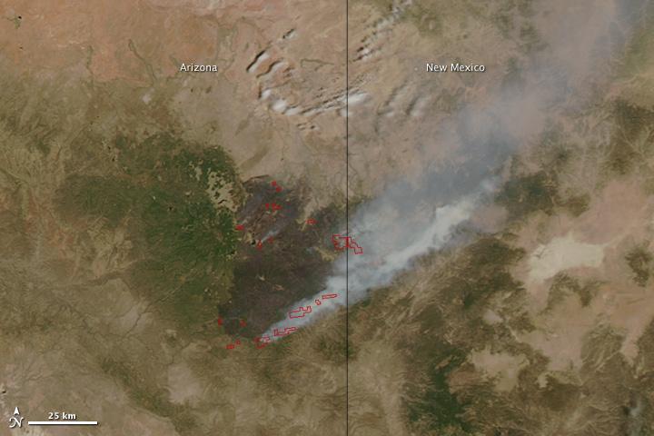 Wallow Fire, Arizona