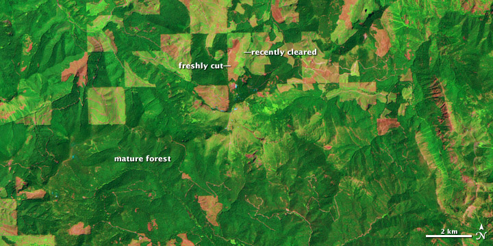 Logging and Regrowth in Washington State